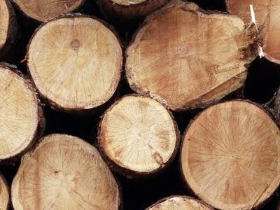 kłody drewniane 1