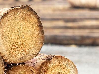 kłody drewniane 3