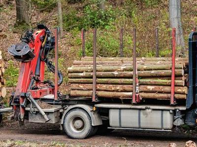 kłody drewniane 8
